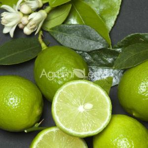 limetta messicana(citrus aurantifolia) copia