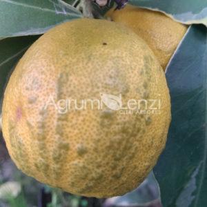 arancio turco web