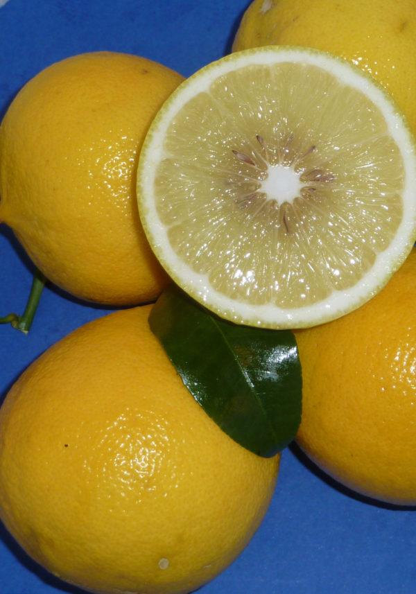 bergamotto (citrus bergamia) copia