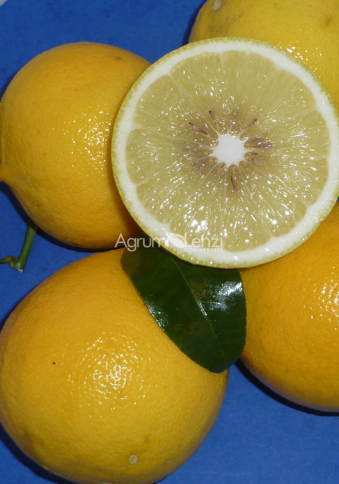 bergamotto castagnaro citrus bergamia agrumi lenzi