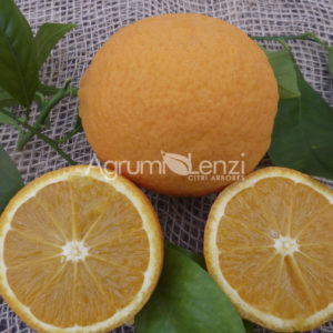arancio 4 stagioni12012014 025