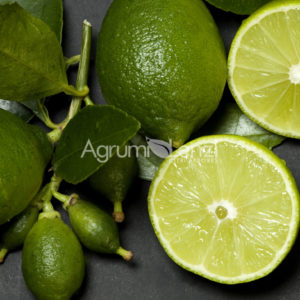 Lime dei Caraibi (citrus latifolia) copia
