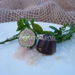 il Finger Lime Sanguinea ha origini australiane