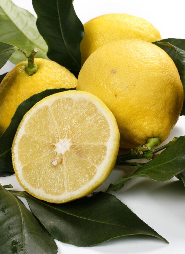 Bergamotto Femminello (Citrus bergamia)