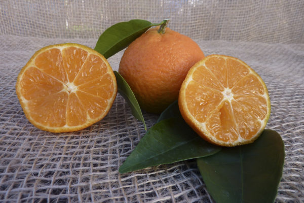 clementino hernandina15012014 014