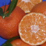 clementino tardivo (citrus clementina) copia
