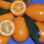 kumquat ovale (fortunella margarita) copia