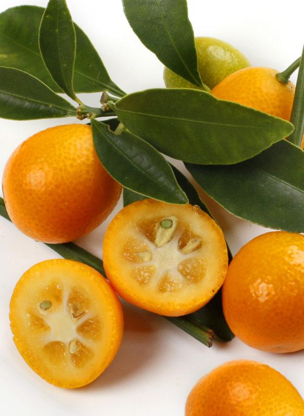 kumquat rotondo