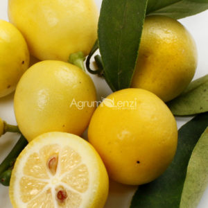 Limequat eustis