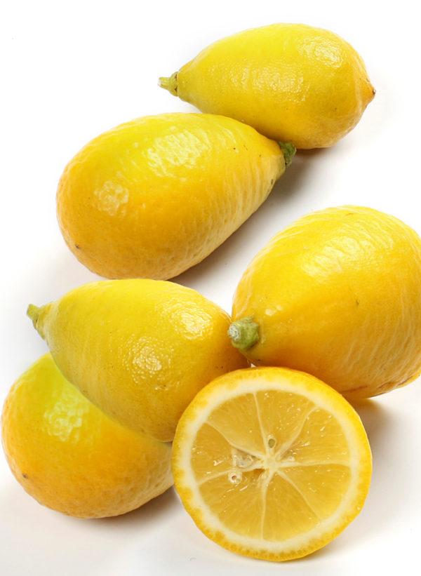 limequat tavaresG_5924x web