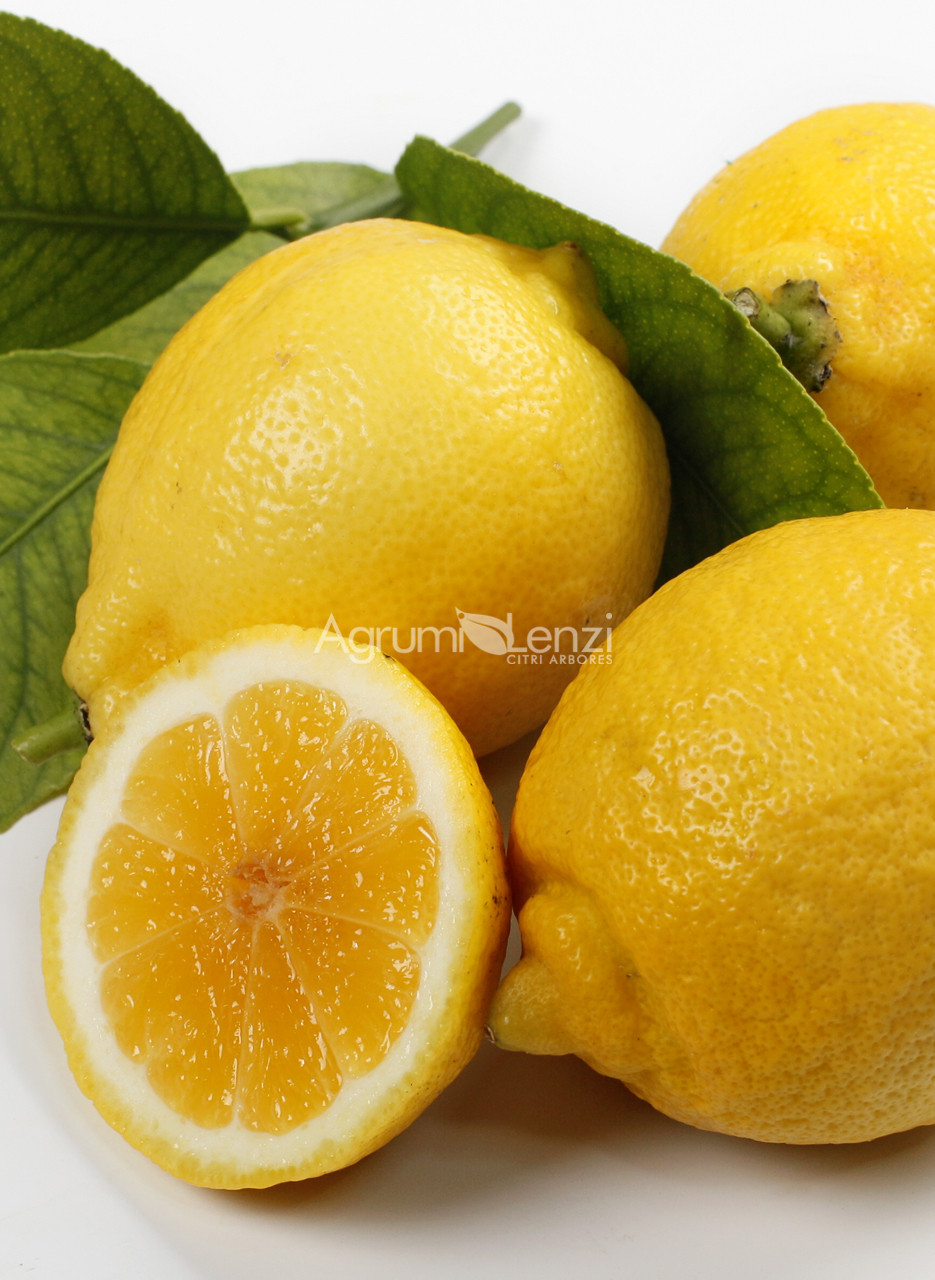 Limone Dolce del Brasile