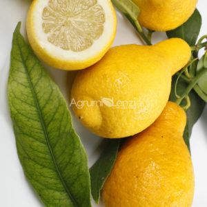 Limone Salicifolia