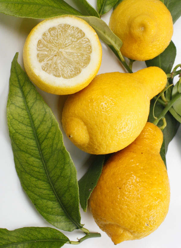 limone salicefolia
