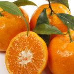 mandarino blida