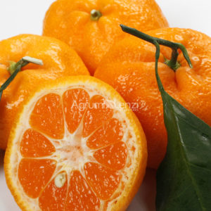 mandarino satsuma