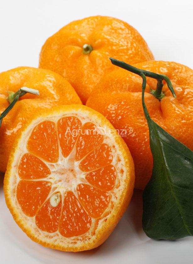 Mandarino Satsuma Miyagawa
