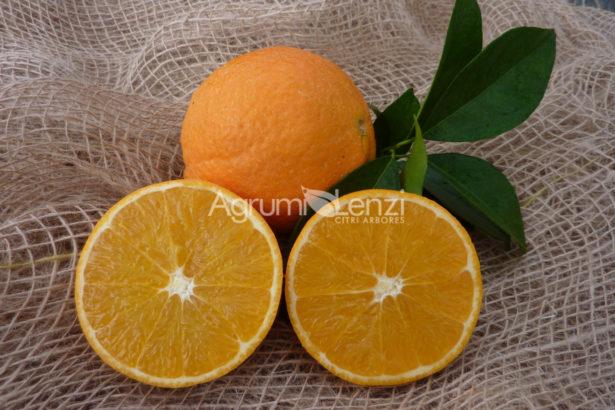 Arancio Fukumoto