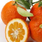 arancio-amaro-comune-o-melangolo-citrus-aurantium