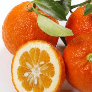Melangolo (Citrus aurantium)
