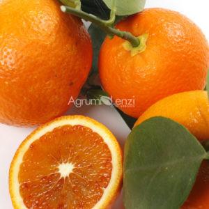 arancio-fragola-citrus-sinensis