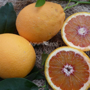 Arancio Tarocco Meli (Citrus sinensis)