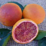 Arancio Tarocco Rosso (Citrus sinensis)