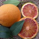Arancio Tarocco Sciara (Citrus sinensis)
