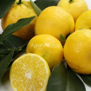 limoncino-dolce-o-pursha-citrus-limetta-web