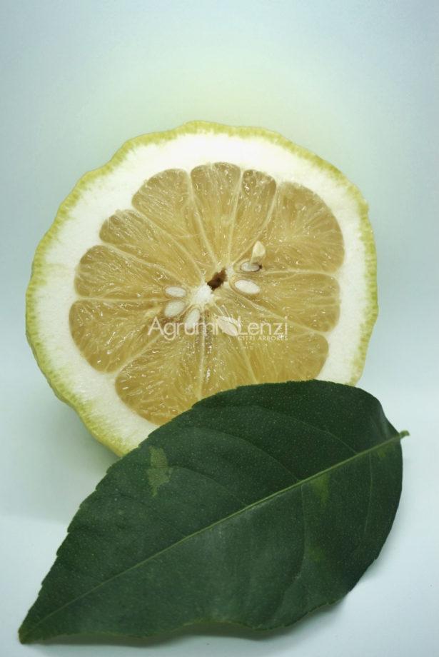 Limone Cedrato Gigante