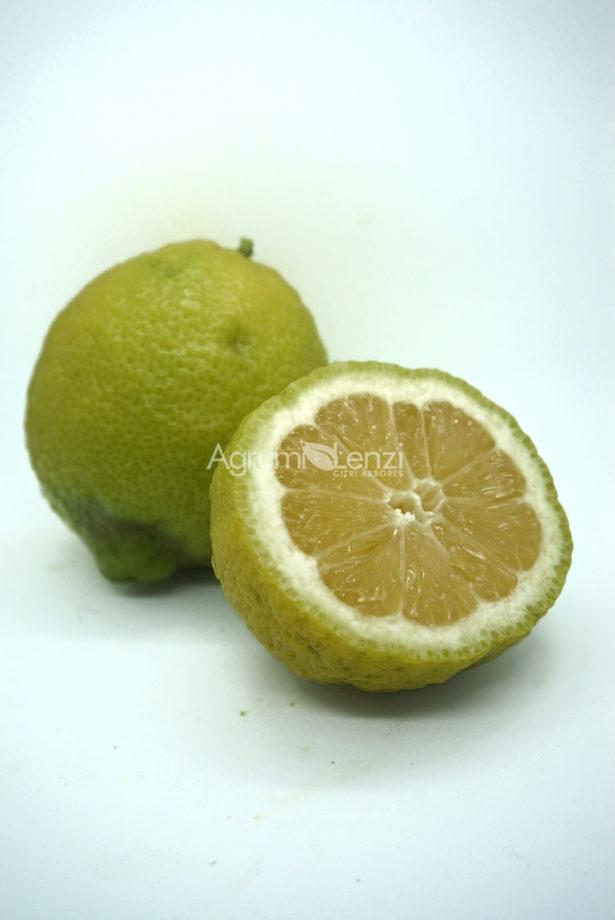 Limone Rugoso