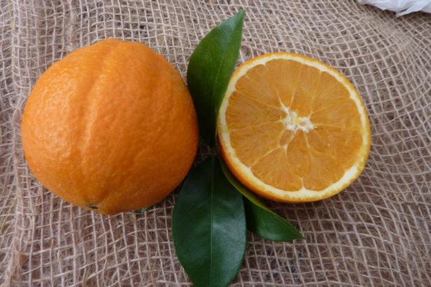 Arancio Navelina Corrugato