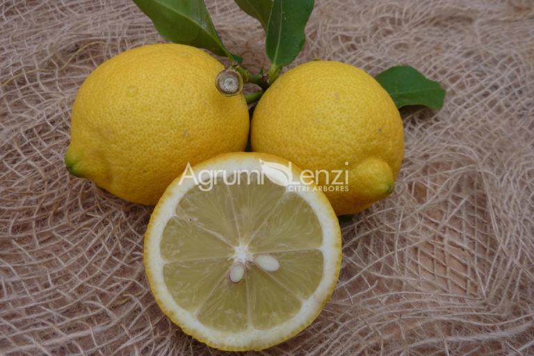 Limone Eureka 4 stagioni