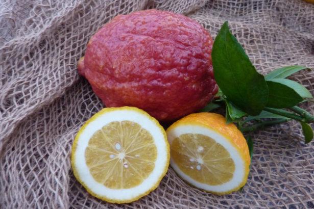 Limone Vinato o Rosso (Citrus limon)
