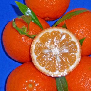 arancio-amaro-salicifolia-citrus-aurantium-salicifolia-copia