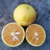 Arancio variegato rosso