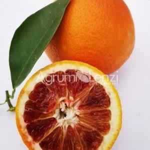 Arancio Tarocco Comune