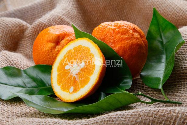 Arancio Vaniglia