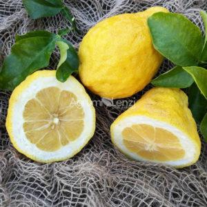 citrumelo