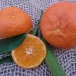 clementino-fina12012014-028