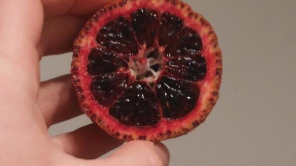 clementino rubb