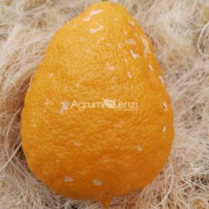 limetta aranciata