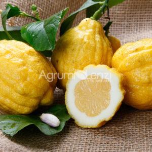limone-angolare