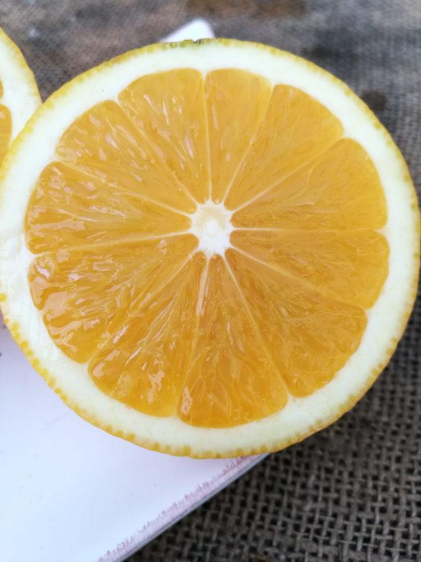 Limone Aranciato