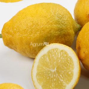 limone-fiorentino_mg_6074x-web