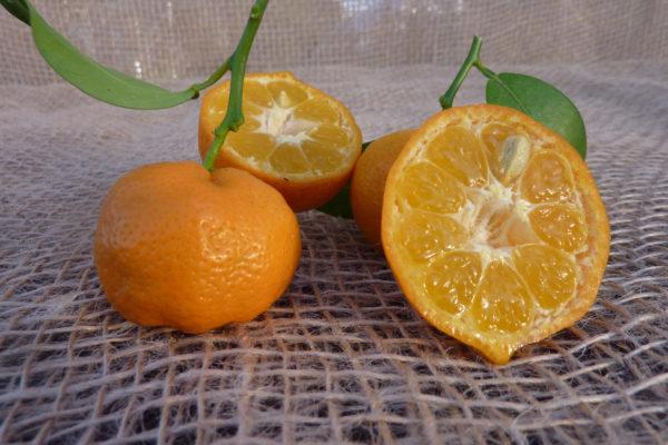 mandarino-a2-15012014-016