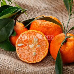 mandarino-fortune