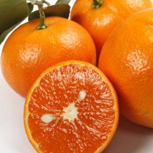 mandarino-murcotte