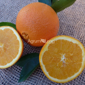 Arancio Washington Navel