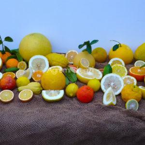 Frutta in vendita