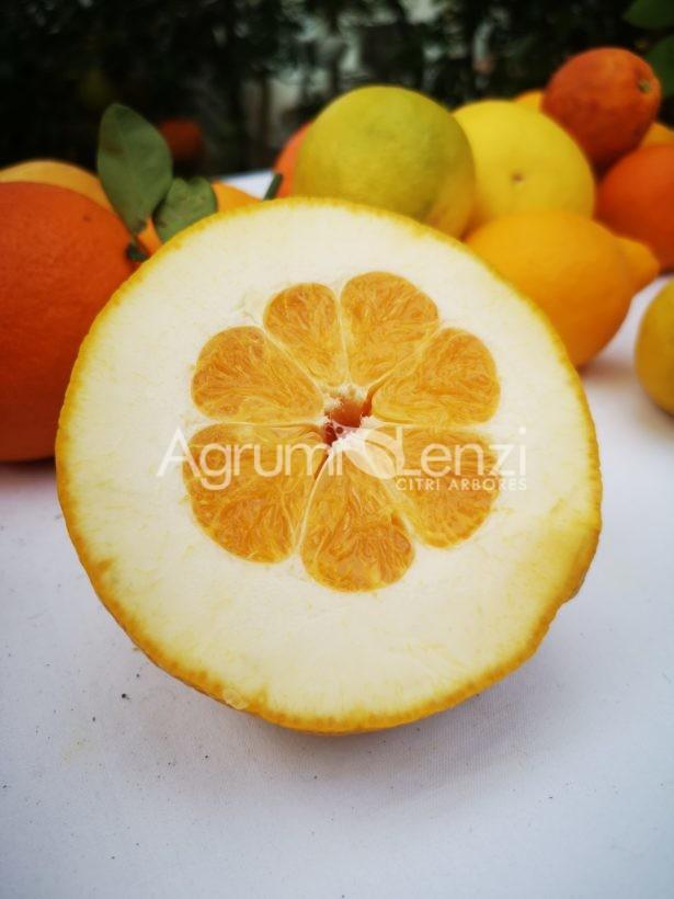 arancio amaro x pompelmo
